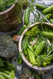 在泥罐的腌制的低盐分黄瓜 免版税库存图片