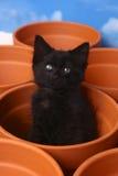 在泥罐里面的困逗人喜爱的小猫 免版税库存图片