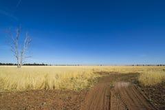 在泥铺跑道附近的桉树胶树在Parkes,新南威尔斯,澳大利亚附近的干草草甸 库存照片