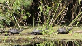 在注册的三只乌龟河 股票录像
