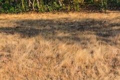 在注视着令人敬畏在冬天季节的早晨的领域的小干燥草本 库存图片