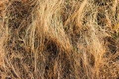 在注视着令人敬畏在冬天季节的早晨的领域的小干燥草本 图库摄影