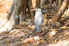 在注视着非常好晴天的动物园的白色白鹭鸟 免版税库存图片