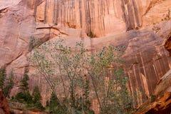 在泰勒小河足迹上中间叉子的墙壁, Kolob,锡安国家公园,犹他的手指峡谷 免版税库存照片