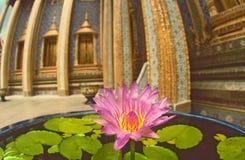 在泰国寺庙的莲花 图库摄影