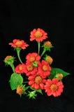 在黑背景的美丽的红色花 库存照片