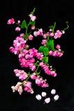 在黑背景的美丽的桃红色花 库存照片