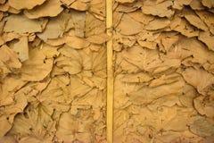 在泰国烘干叶子墙纸 库存图片