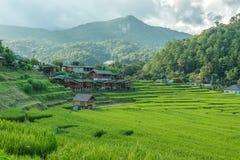 在泰国的北部的米领域 免版税库存图片