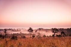 在泰国的大草原的日出 图库摄影