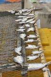 在泰国的干鱼 免版税库存照片