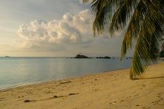 在泰国酸值阁帕岸岛的晴朗的棕榈树 库存照片
