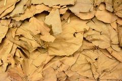 在泰国3烘干叶子墙纸 免版税图库摄影