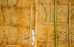 在泰国7烘干叶子墙纸 库存图片