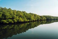 在泰国a使看法,大美洲红树森林环境美化 免版税图库摄影