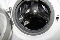 在洗衣机的猫 库存照片