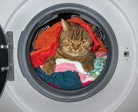 在洗衣机里面的猫 库存图片