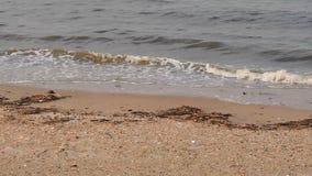 在洛朗斯港口的小波浪 影视素材