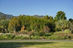 在洛杉矶郡树木园的美丽自然场面&植物 库存图片