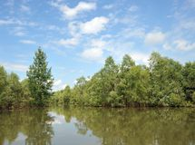 在洪水期间的溢出的河Ob 免版税图库摄影