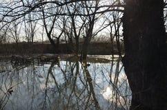 在洪水的河水 库存照片