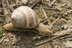在活动中另一只的蜗牛 免版税库存图片