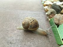 在活动中的蜗牛 库存图片