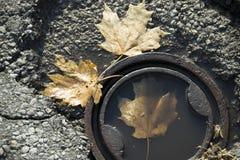 在流失的叶子 库存照片