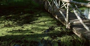 在流的桥梁 免版税图库摄影