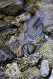在流的湿岩石。 免版税图库摄影