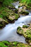 在流血的湖,斯洛文尼亚的Vintgar峡谷 免版税库存图片