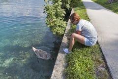 在流血的被晒黑的白种人妇女饲料野生幼小天鹅,斯洛文尼亚 图库摄影