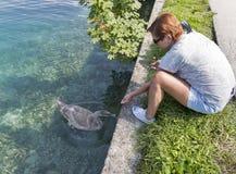 在流血的被晒黑的白种人妇女饲料野生幼小天鹅,斯洛文尼亚 免版税库存图片