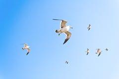 在浅兰的天空的难以置信的海鸥群 免版税库存照片