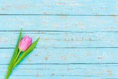 在浅兰的木桌背景的一朵桃红色郁金香花与拷贝空间,顶视图 免版税库存照片