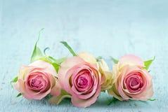 在浅兰的背景的三朵桃红色玫瑰 图库摄影