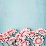 在浅兰的破旧的别致的背景,花卉边界,顶视图, quadrate的可爱的花 创造性的布局 图库摄影