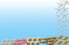 在浅兰的背景的孤立贝类 库存图片