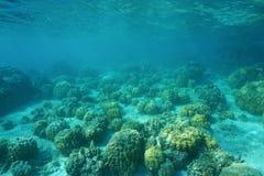 在浅海底上的水下的风景珊瑚 库存图片