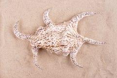 在浅海沙特写镜头的美丽的壳岩石 库存图片