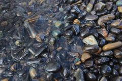 在浅湖的Polsihed石头 库存照片