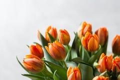 在浅灰色的墙壁上的美丽的橙色和黄色郁金香 背景花光playnig 颜色温暖 复制空间 免版税库存图片
