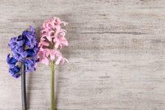 在浅灰色的石背景的两朵花 最低纲领派样式,拷贝空间 库存图片