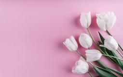 在浅粉红色的背景的白色郁金香花 贺卡或婚礼邀请 免版税库存照片