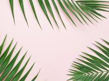 在浅粉红色的背景的绿色棕榈叶 图库摄影
