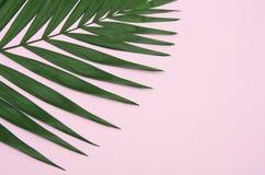 在浅粉红色的背景的绿色棕榈叶 免版税库存图片