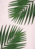 在浅粉红色的背景的绿色棕榈叶 免版税库存照片