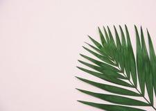 在浅粉红色的背景的绿色棕榈叶 库存图片