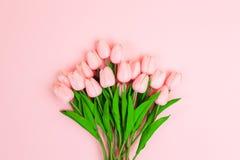 在浅粉红色的背景的美丽的桃红色郁金香 库存照片
