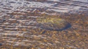 在浅水区的金黄波浪 股票录像